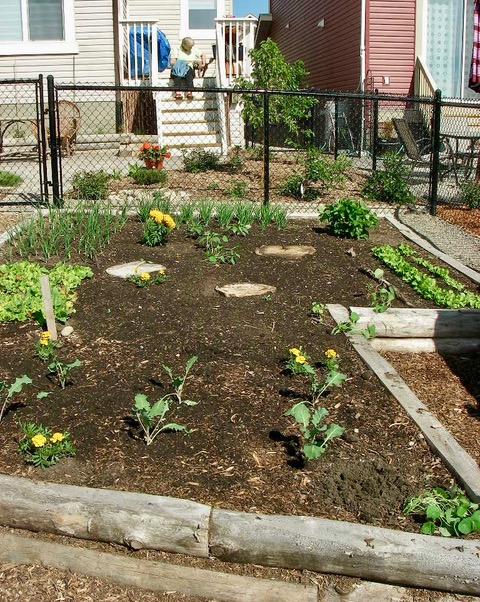 A Garden for Food and Dogs in Aspen Woods